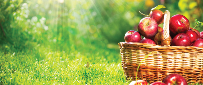Apples and Lower Cholesterol